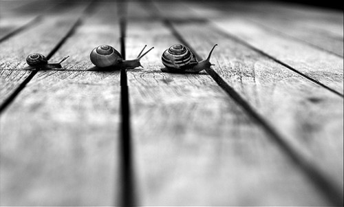 photography,black,and,white,lines,molluscs,perspective,snails-48556a6b41e53f5ea739c6aa5c323d1c_h