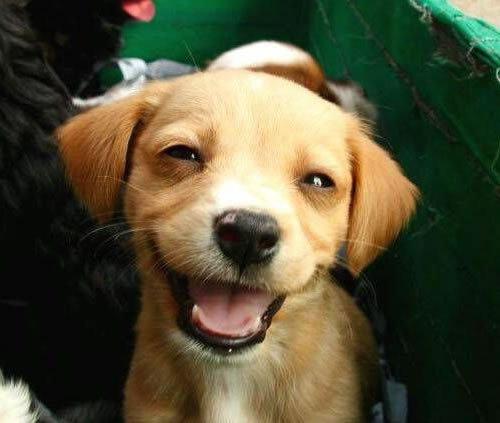 laughingdog