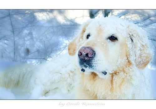 hond,sneeuw,winter-29f7aeac90d131a0b53686daa8ec5b3d_h
