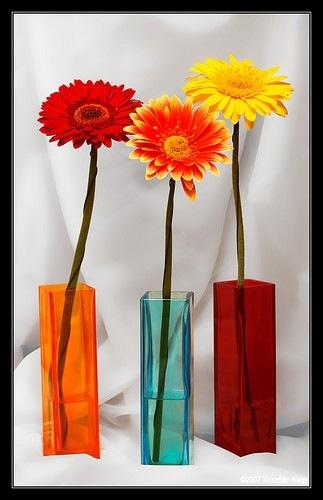 colorful,flower-72f44fce92ab02487770e41f86d42aea_h