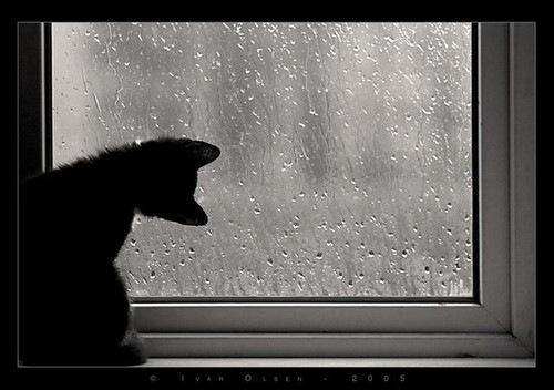 cats,photography,rain,windows-19f4ea7feef0c2ed965314091e126e56_h