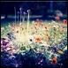 flower,nature-c99291a284e8c9822d2e26e2c4f68bae_h[2]