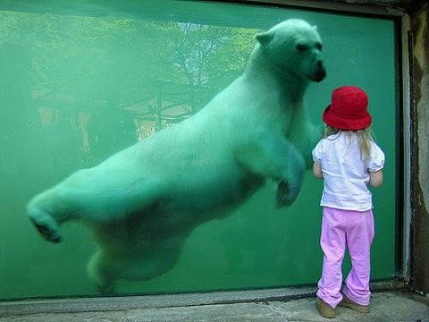 bear,child,confrontation,contrast,curiosity,juxtaposition-64277f2d59ced01d0892d2325840ac38_h